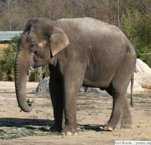 Elefant im Tierpark Hellabrunn München