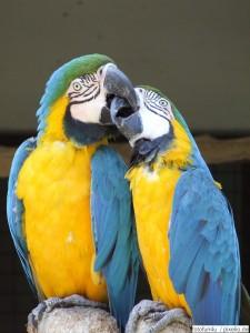 Papageien im Vogelpark Walsrode