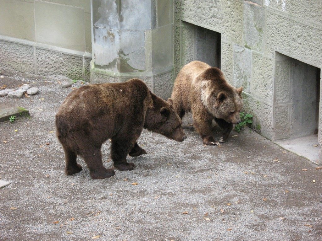 Bärengehege -  Augsburger Zoo
