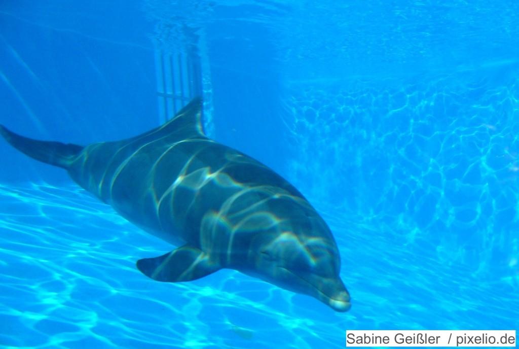 Delfin im Tiergarten Nürnberg