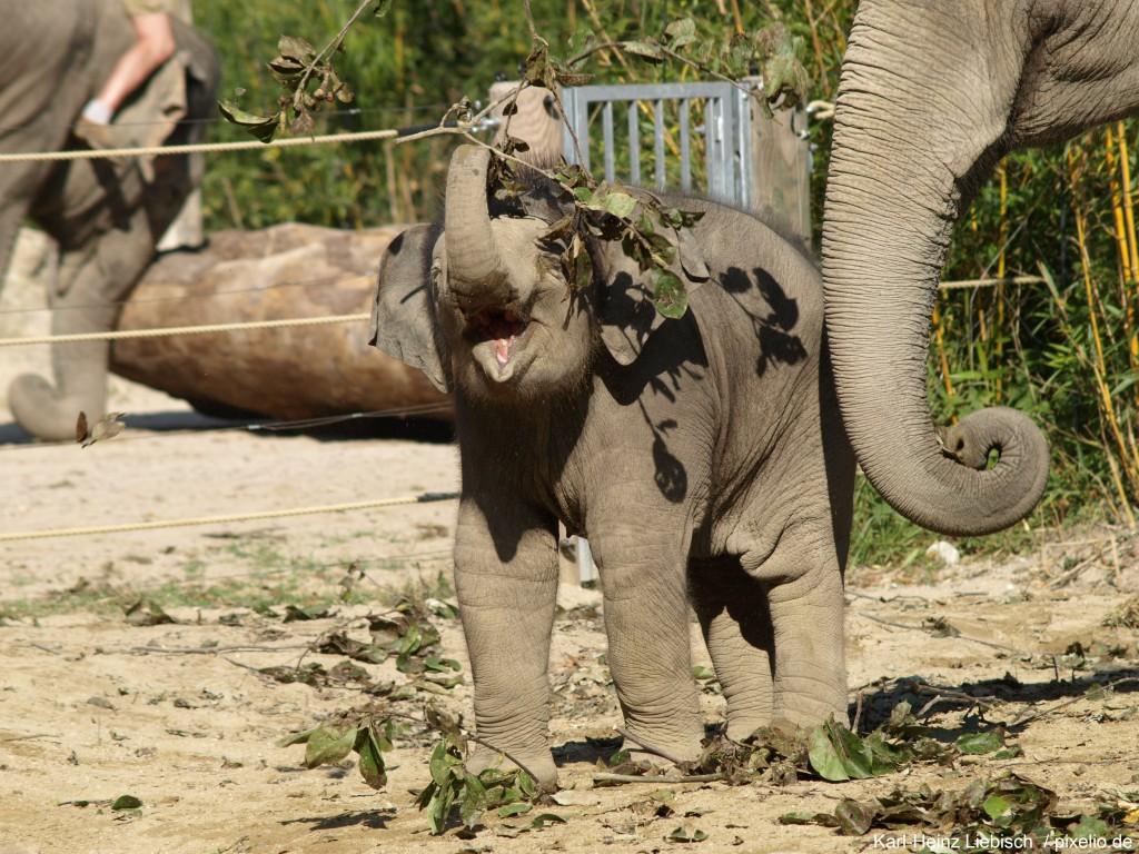 Elefanten Baby im Zoologischen Garten Berlin