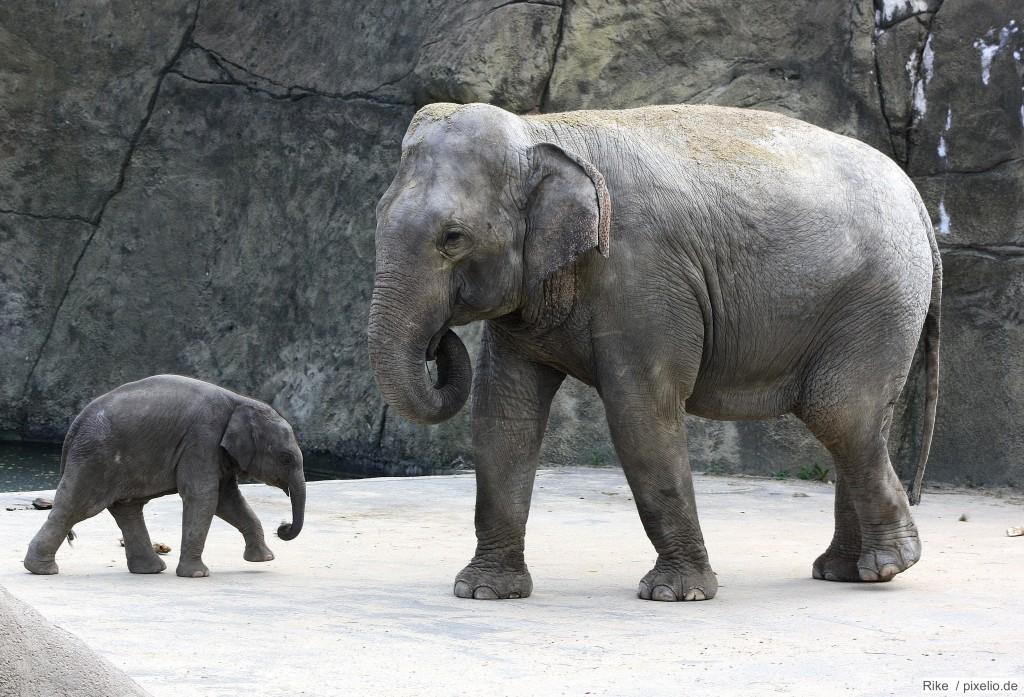 Elefanten im Tierpark Hellabrunn München
