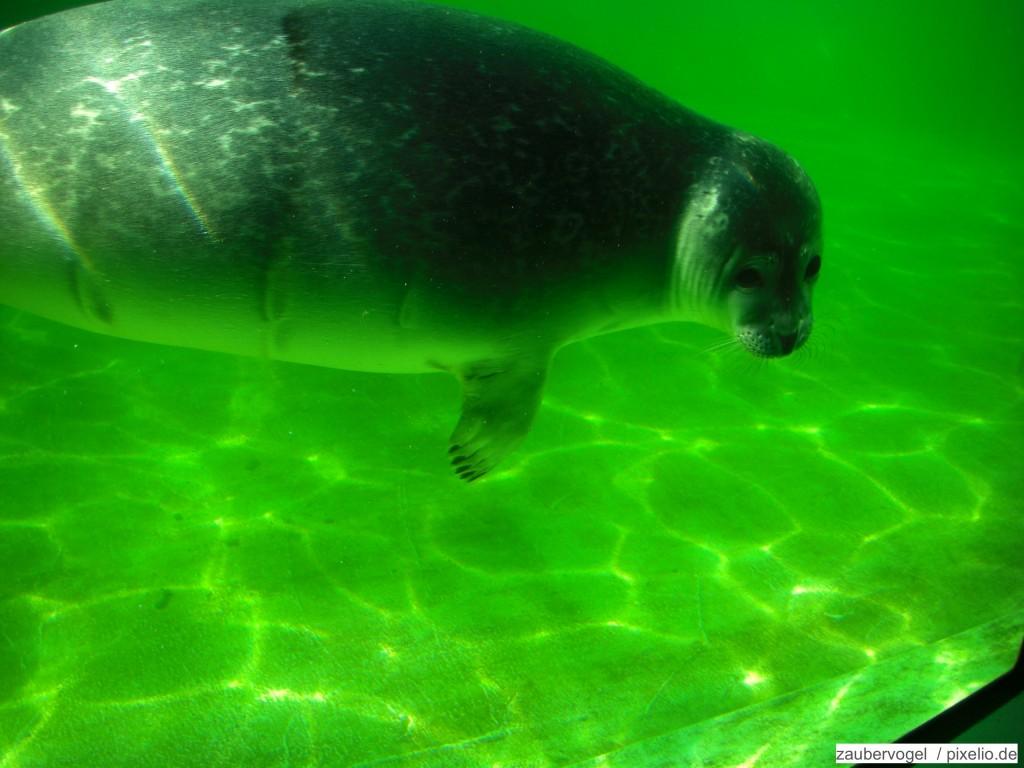 Seehunde im Zoo am Meer Bremerhaven